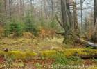 Malý Javorník a Losový – nové rezervace v CHKO Beskydy