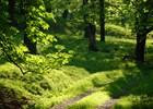 Hukvaldská obora - Přírodní památka Hukvaldy