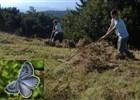 Úklid lesní louky v Dinoticích, kde se výskytuje kriticky ohrožený druh motýla – modráska černoskvrnného