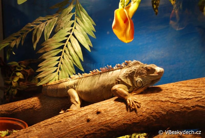 Aqua Terra Mini Zoo