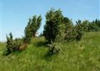 Péče o vzácné pastviny plné bylin v Beskydech