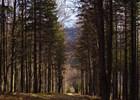 Kykulka - výhled na Lysou horu